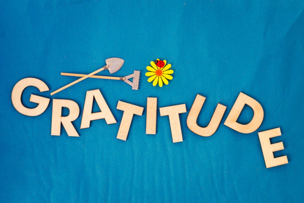 Top view of capital letters made of wood spelling the word gratitude on light blue background with yellow daisy ladybug miniature shovel and rake cultivate gratitude concept.