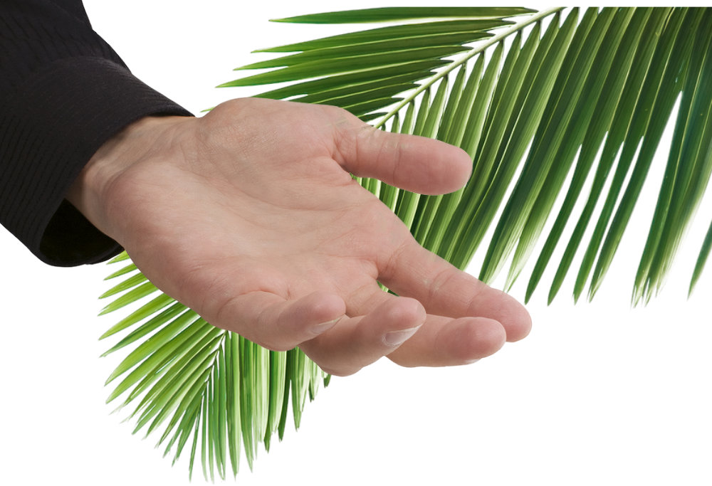 What are the most important Palms of Palm Sunday? Palm